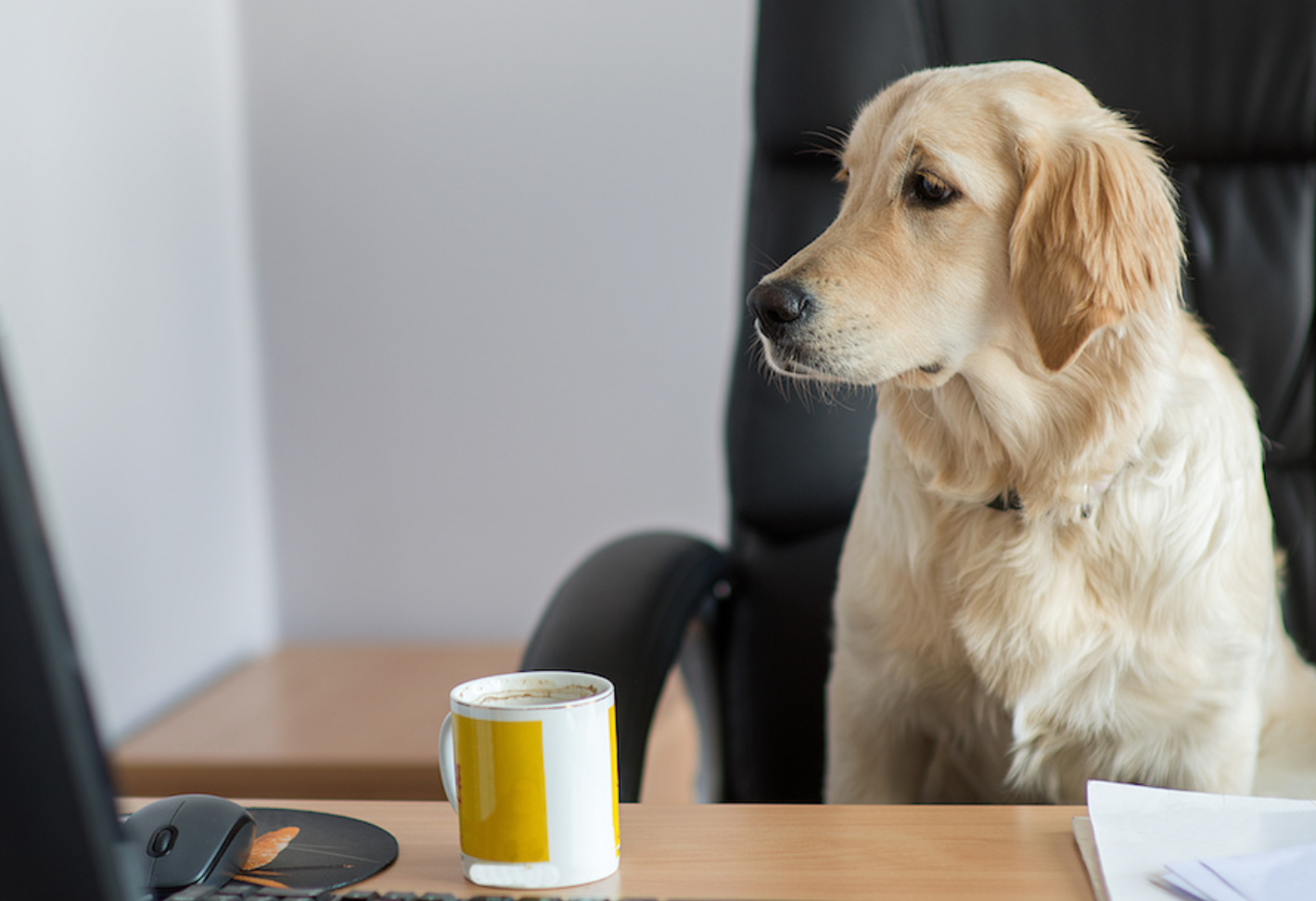 Pet insurance is one of the fastest-growing employee benefits.