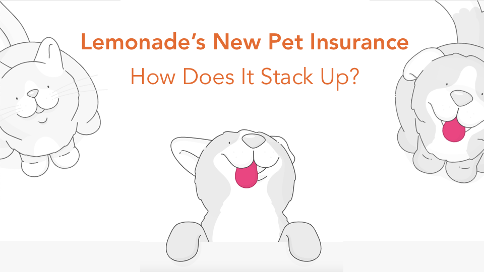Is Lemonade's new pet insurance good? Let's take an objective look at how it stacks up to other pet insurance companies in the industry.
