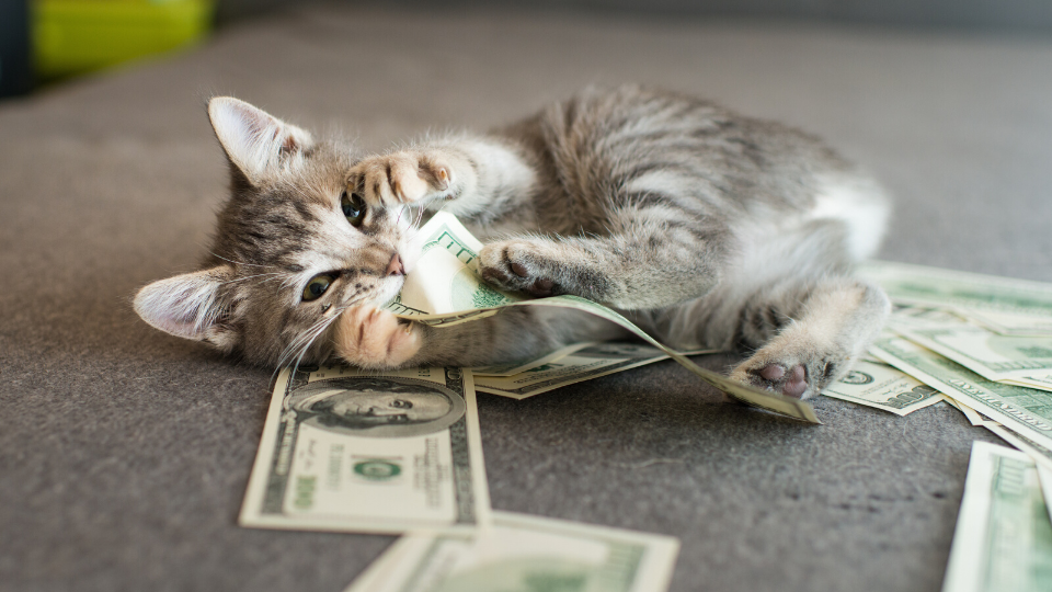 kitten with money and bills to pay