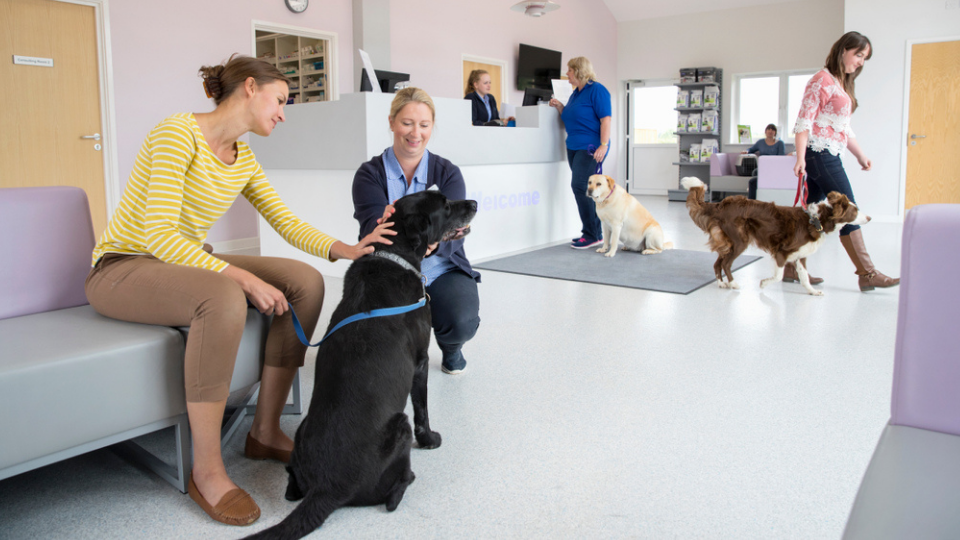 veterinary clients waiting with pets